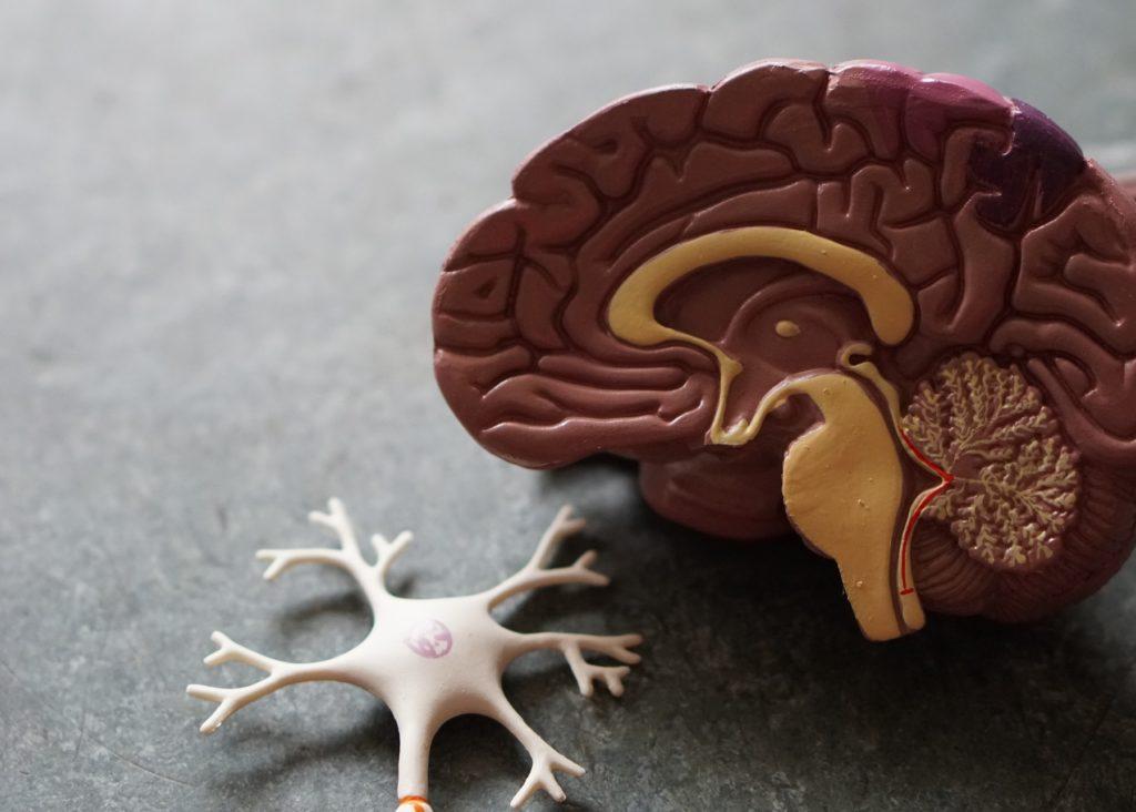 Mysteries of the human brain. Photo by Robina Weermeijer on Unsplash