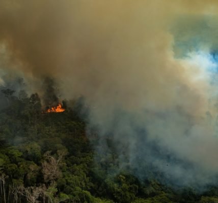Amazon rainforest fire, 2019. Image (c) Greenpeace