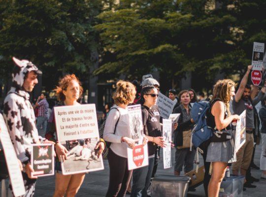 Activism in action. Protest march. Photo byDavid LarivièreonUnsplash