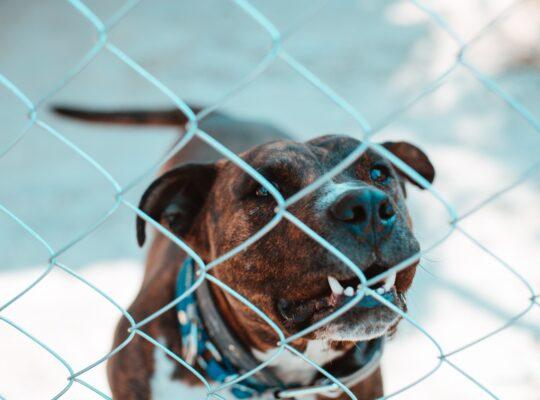 Photo of caged dangerous dog. Photo byOsvaldo FlorezonUnsplash.