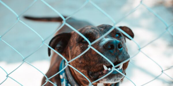 Photo of caged dangerous dog. Photo by Osvaldo Florez on Unsplash.